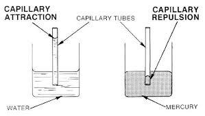 Capillary Action Chemistry Libretexts