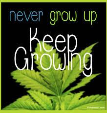 Grow marijuana - Weed Memes via Relatably.com