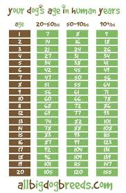 Your Dogs Age In Human Years All Big Dog Breeds