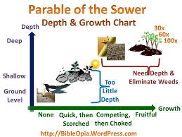 the parable of sower. Plain Parable Parable Of The Sower Initial Depth And Growth Chart With The Of W