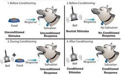 Example Of Classical Conditioning Classical Conditioning Ao1 Ao2 Ao3 Psychology Wizard