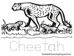 Animals Cheetah Colouring Pages Cheetah Print Coloring Pages
