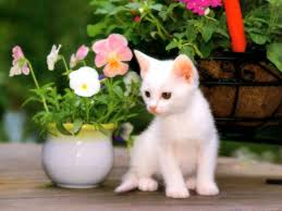 Cute Wallpapers Free Download For ...