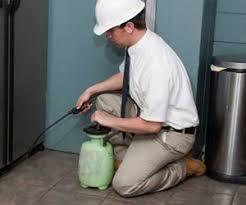 Oakville Pest Control, Removal & Extermination Services