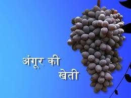 g cultivation hindi you