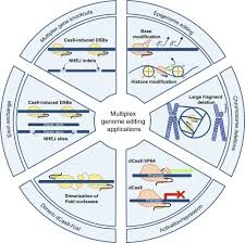 Genome Editing Crispr Cas9 Enabled Multiplex Genome Editing And Its Application