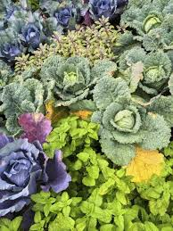 Kale Companion Planting Chart Planting Next To Mint What Are Good Plant Companions For Mint