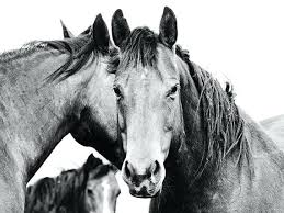 large horse wall art amazing large western horse art in black and white x horse photograph big horse wall large metal seahorse wall art on large metal seahorse wall art with large horse wall art amazing large western horse art in black and