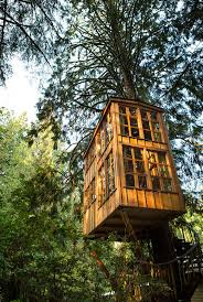 The 25 Best Treehouse Cabins Ideas On Pinterest  Tree House Treehouse Accommodation Nsw