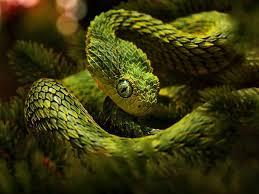 3d king cobra snake wallpaper