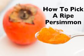 When to pick asian persimmons