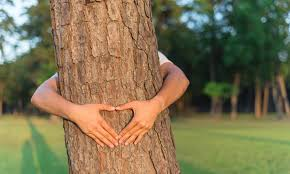Image result for for trees