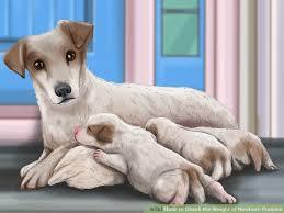 Cavachon Puppy Weight Chart 3 Ways To Check The Weight Of Newborn Puppies Wikihow
