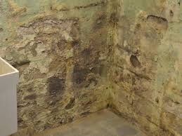 remove mold from basement walls bigeasydesigncom yellow mold on basement walls