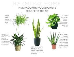 non toxic house plants peace non toxic houseplants for dogs