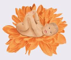 november birth flower chrystanthemum