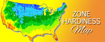 at hall s garden we carry plants that are best suited for our zone for more information on plant hardiness zones please visit the usda united states
