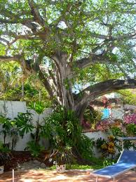 Small Picture 75 best Mexican Gardens images on Pinterest Mexican garden