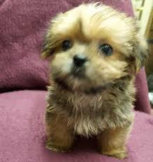 cute puppies for sale. Modren Sale Adorable Puppies In Cute For Sale
