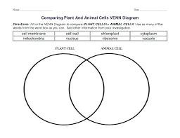Plant Cells Vs Animal Cells Venn Diagram Animal Comparing Plant And Cells Worksheets Answers Venn Diagram