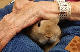 Image result for pet assisted therapy small animals