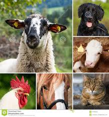real farm animals collage. Exellent Animals Collage With Photos Of Various Farm Animals Throughout Real Farm Animals