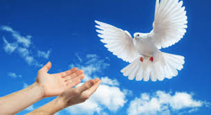 Resultado de imagem para mensagem do papa para o dia mundial da paz 2017