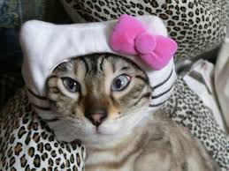 Image result for cats dressed like hello kitty