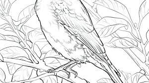 The Best Free Bluebird Coloring Page Images Download From 28 Free