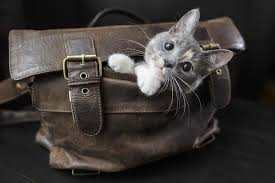 how to get cat out of leather