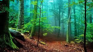 Forest Desktop Wallpaper HD ...
