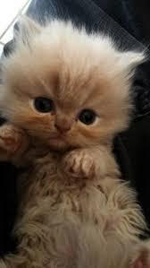 cute fluffy cats tumblr. Wonderful Tumblr Cute Kittens In Love Cats On Tumblr Fluffy E