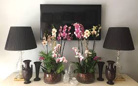 orchid plants are a perfect gift for your family friends host of the party you are invited to or your colleagues