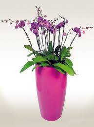 office planter. office desktop orchids planter f