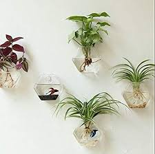 fresh hanging glass planter set of 2 wall air plant terrarium geometric hexagon australium nz south