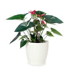 office pot plants. Modren Office Office Plants On Pot