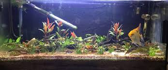 i decided some time ago to make my tropical aquarium a planted tank they re just better so i needed a better co2 generator