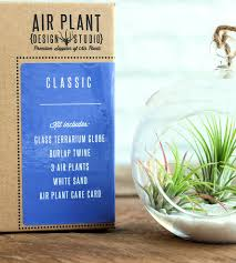 Air Plant Terrarium Diy Air Plant Terrarium Kit Home Crafting Diy Air Plant