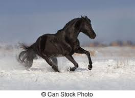 black horses running in a field. Modren Running Horse Run In Winter Field For Black Horses Running In A Field B