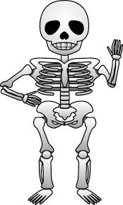10月8日骨と関節の日 骸骨のイラスト無料ビジネスイラスト素材のビジソザ
