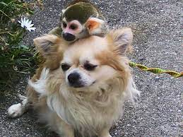 犬猿 の 仲