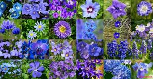 blue flowers with names and pictures