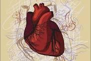 Image result for серце