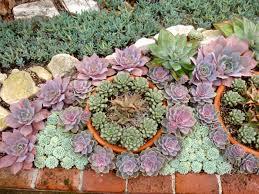 Small Picture READER PHOTOS A gem of a succulent garden Fine Gardening
