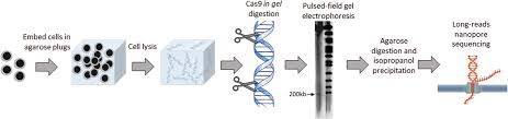 New Approach To Nanopore Sequencing That Is Sure To Catch