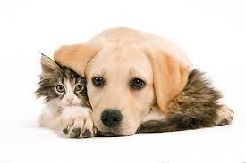 kittens and puppies hugging. Perfect And KimballStock_DOK 01 JE0009 01_preview Inside Kittens And Puppies Hugging T