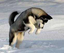 doge snow gif. Fine Doge Daily Doge Doge Playing In The Snow  In Snow Gif