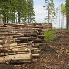 what are some environmental problems pictures clearcutting is a form of environmental degradation