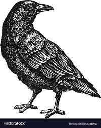 Hand Drawn Black Crow Raven Bird Sketch