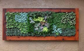 succulent treatment living wall art saveenlarge on live succulent wall art with living wall art succulents elitflat